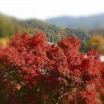 奈良の長谷寺もみじまつり
