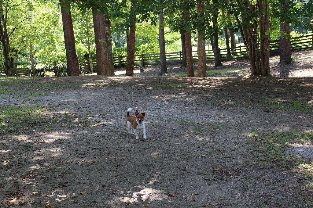 「清里丘の公園」ドッグラン