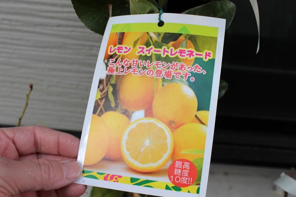 レモン スイートレモネード
