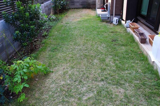 まだらな芝生