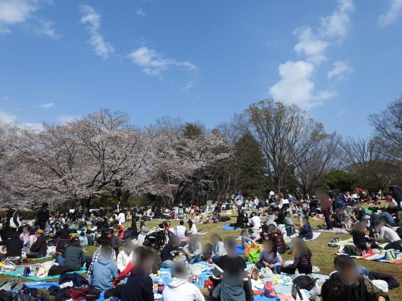 2019年3月31日 光が丘公園の花見