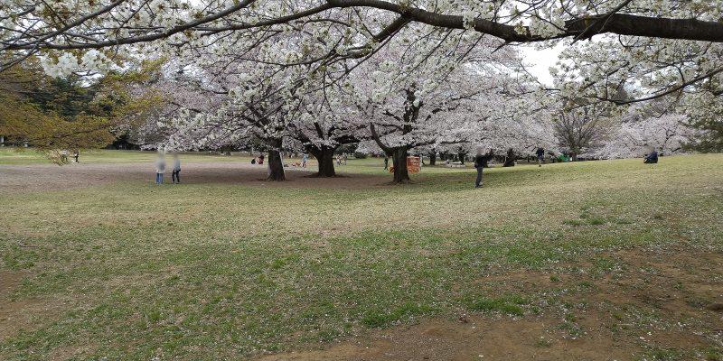 2020年3月28日 光が丘公園